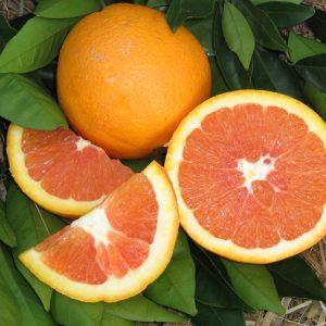 Sweet, juicy Cara Cara Navel Orange whole and sliced showing pink flesh