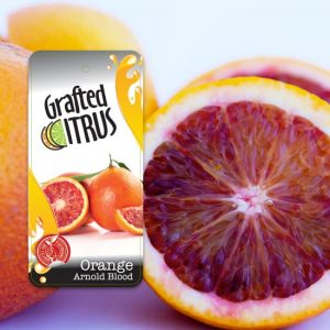 Red streaked Arnold Blood Orange with Engall's Nursery Grafted Citrus Arnold Blood label