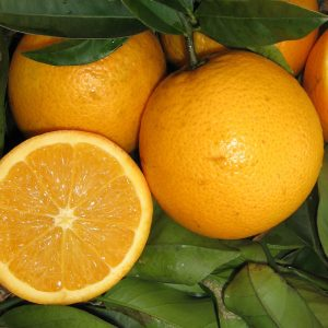 Dwarf Seedless Valencia Orange